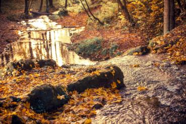 Fall Foliage Autumn Forest