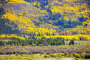 Fall Foliage Colorado