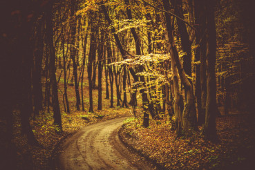 Fall Foliage Forest Road