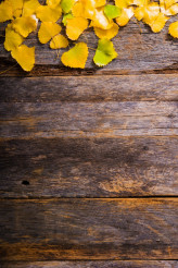 Fall Wooden Background