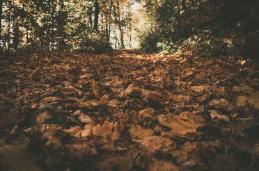 Fallen Autumn Leaves in a Forest