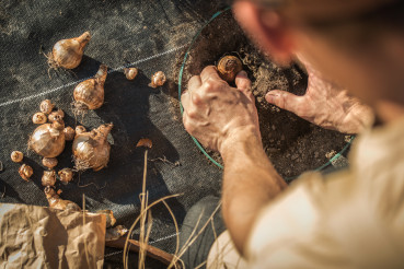 Farmer Planting Flower Bulbs Close Up