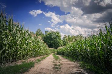 Farmlands Countryside Road