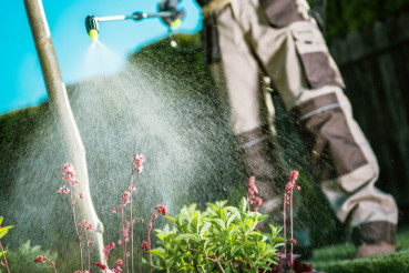 Fighting Insects in the Garden