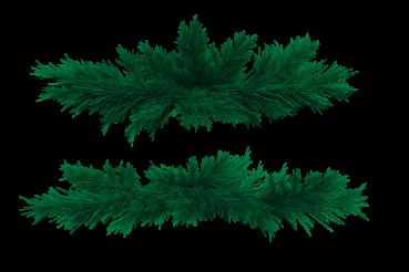Fir Branches PNG