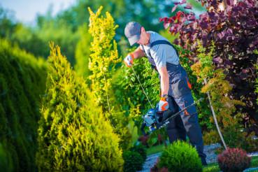 Firing Up Hedge Trimmer