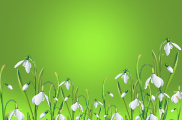 Wallpaper Of White Flowers In Green Background.