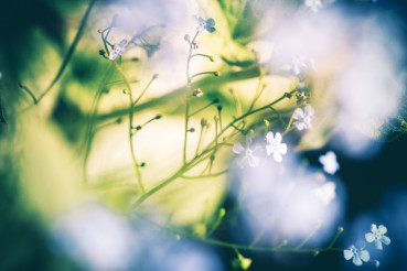 Floral Bokehs Conceptual Nature Background