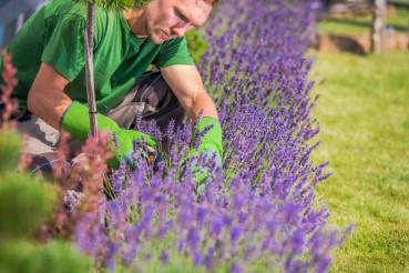 Flowering Heathers Garden