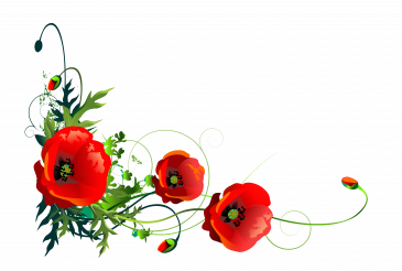 Flowering Red Poppy Flowers Floral Theme