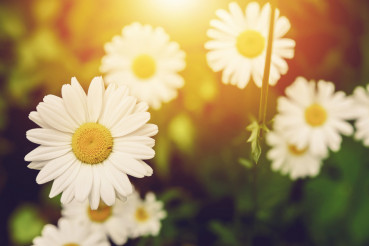 Flowering Sunny Spring