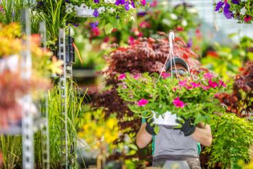 Flowers Farming Work