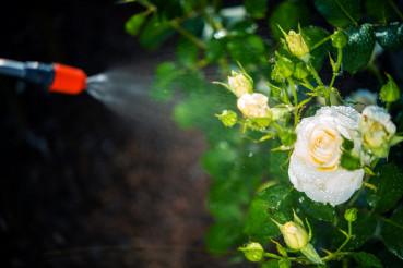 Flowers Pest Control Spraying