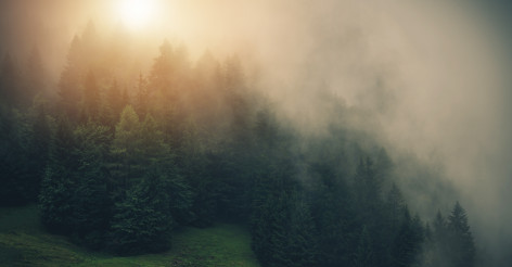 Foggy and Misty Sunrise in the Forest