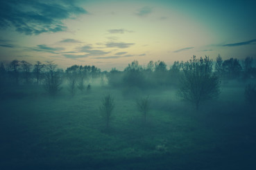 Foggy Evening Scenery