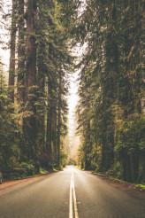 Foggy Forest Road Trip