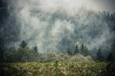 Foggy Hills Landscape