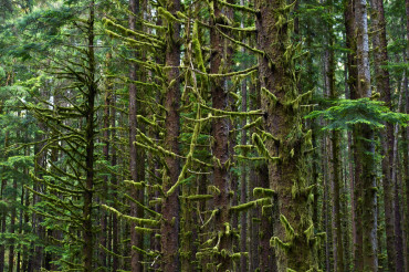 Scenic Rainforest Covered by Moss