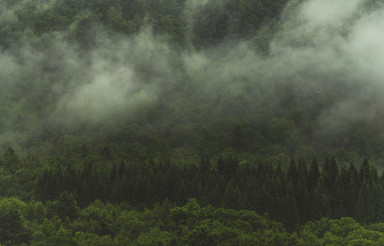 Forest Covered by Morning Fog