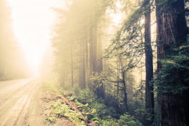 Forest Foggy Road