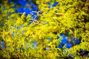 Forest Spring Vegetation