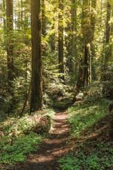 Forest Trailhead
