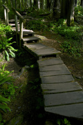 Forest Wooden Pathway