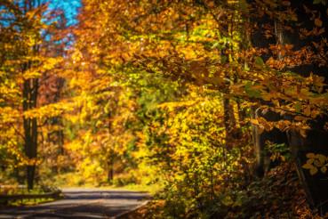 Forestry Fall Foliage