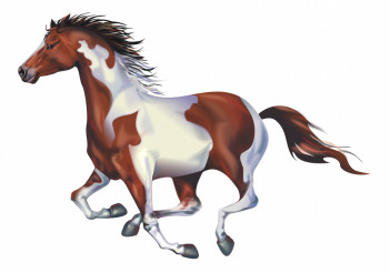 Galloping Spotted Horse