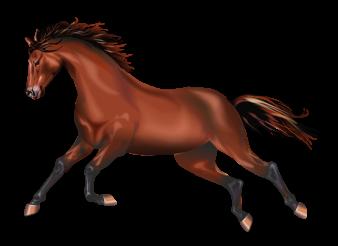 Galloping Wild Mustang