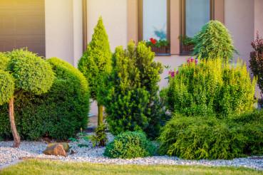 Garden Around the House