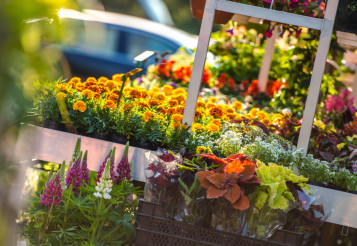 Garden Flowers Business