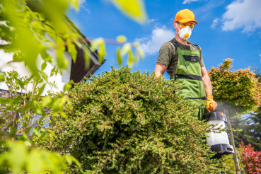 Garden Fungicides to Kill Parasitic Fungi