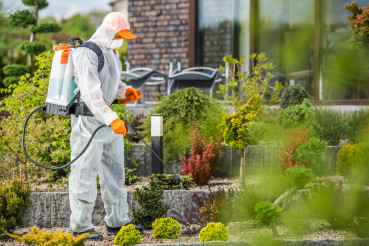 Garden in Protection Suit Spraying Garden Plants with Active Chemicals