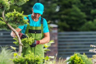 Garden Maintenance Performed by Pro Gardener