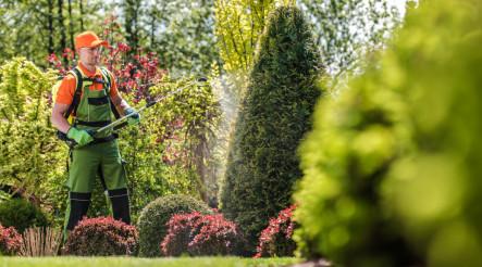 Garden Plants Pesticide