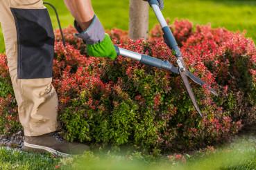 Garden Shrub Trimming Close Up