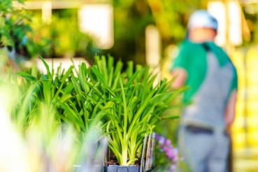 Garden Store Plants For Sale