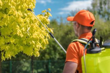 Garden Trees Fertilization