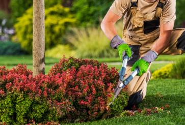 Garden Worker Trimming Plant Branches