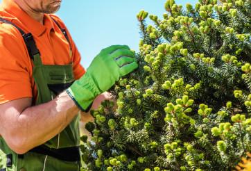 Gardener Checking Garden Plants Health