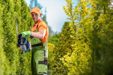 Gardener Green Wall Trimming