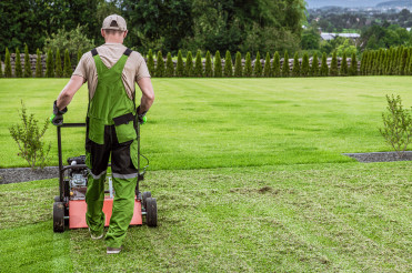 Gardener in His 40s and His Powerful Gasoline Lawn Aerator