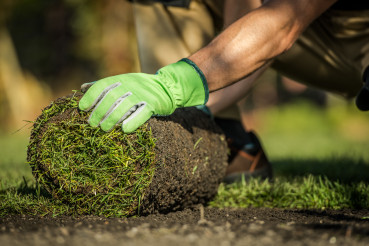 Gardener Installing Natural Grass Turfs in Garden