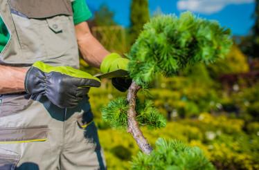 Gardener Looking For Best Plants For His Garden Project