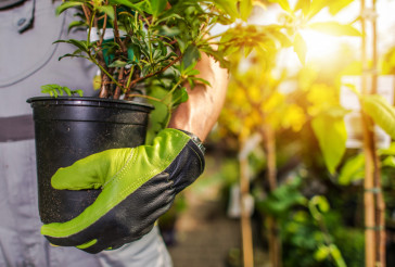 Gardener Planting Plants
