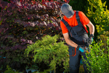 Gardener Plants Cutting