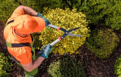 Gardener Plants Shaping Work