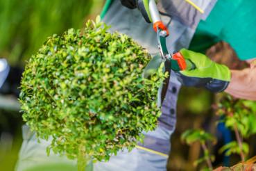 Gardener Shaping Plant