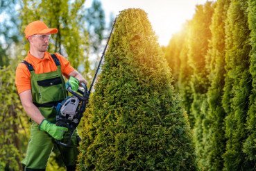 Gardener Shaping Tree